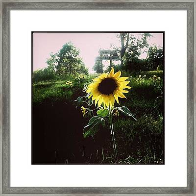 Brighten Your Day  Framed Print