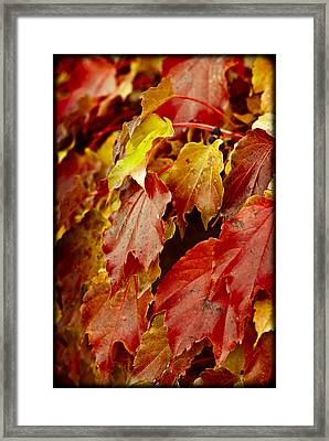 Brightest Before The Fall Framed Print