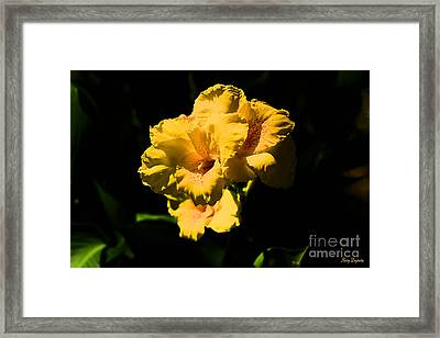 Brightly Shining  Framed Print