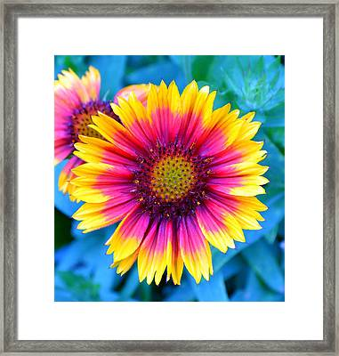 Brilliance Framed Print by Deena Stoddard