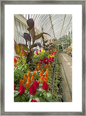 Brilliance Palm House Ireland Framed Print by Betsy Knapp