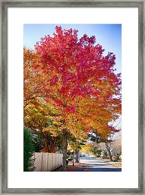 brilliant autumn colors on a Marblehead street Framed Print