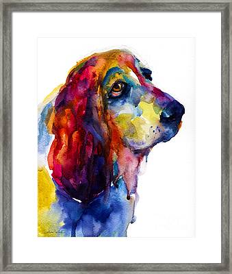 Brilliant Basset Hound Watercolor Painting Framed Print by Svetlana Novikova