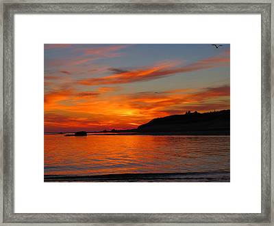 Brilliant Beginnings Framed Print by Dianne Cowen