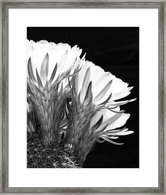 Brilliant Blossoms Diptych Right Framed Print by Kelley King