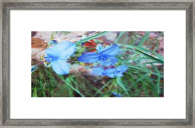 Framed Print featuring the photograph Brilliant Blue Flowers by Cathy Anderson