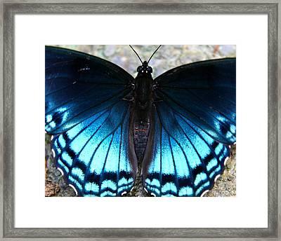 Brilliant Butterfly Framed Print