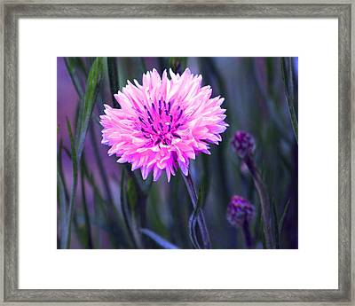 Brilliant Button Framed Print