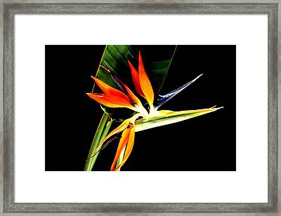 Framed Print featuring the photograph Brilliant by Diane Merkle