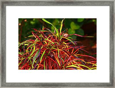 Brilliant Florral Framed Print