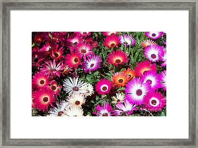 Framed Print featuring the photograph Brilliant Flowers by Chalet Roome-Rigdon
