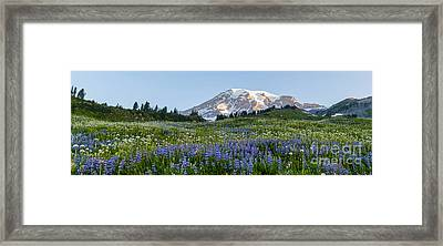 Brilliant Meadow Framed Print by Mike Reid