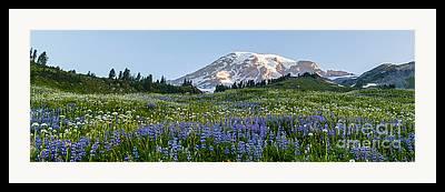 Paradise Meadow Framed Prints