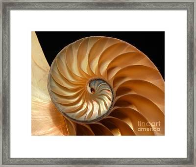 Brilliant Nautilus Framed Print