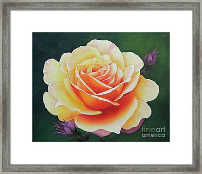 Brilliant Rose Framed Print
