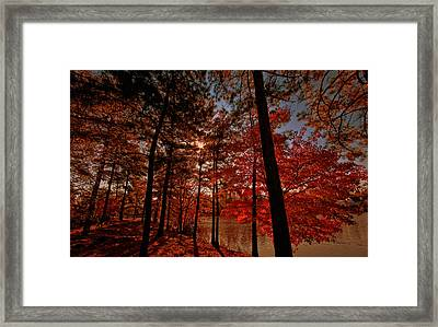 Framed Print featuring the photograph Brilliant Shade by John Harding