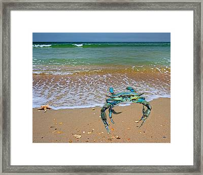 Brilliant Vivid Life Creatures Framed Print by Betsy Knapp
