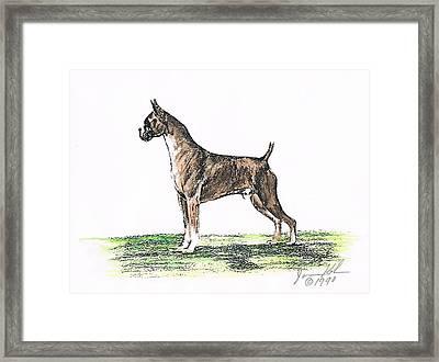 Brindle Boxer Framed Print by Joann Renner
