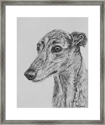 Brindle Greyhound Face In Profile Framed Print by Kate Sumners