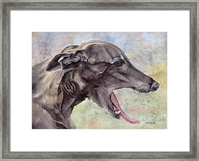 Brindle Greyhound - Sabel Framed Print by Steve Hamlin
