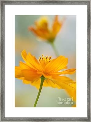 Bring Me A Little Sunshine Framed Print