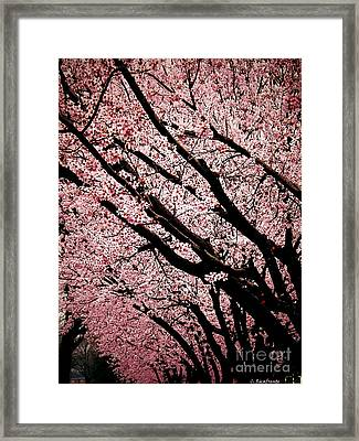 Bring On Spring Framed Print by Christy Ricafrente