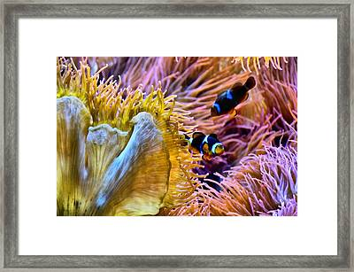 Bring Out The Clowns Framed Print by Angelina Vick