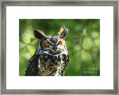 Bringer Of Light Framed Print by Inspired Nature Photography Fine Art Photography