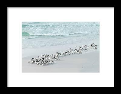 Falkland Islands Framed Prints