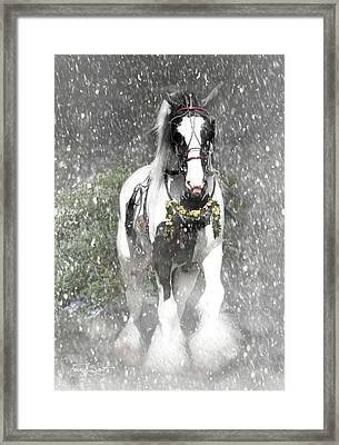 Bringing Home The Christmas Tree Framed Print by Fran J Scott
