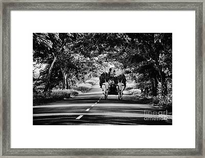 Bringing In The Harvest  Framed Print by Tim Gainey