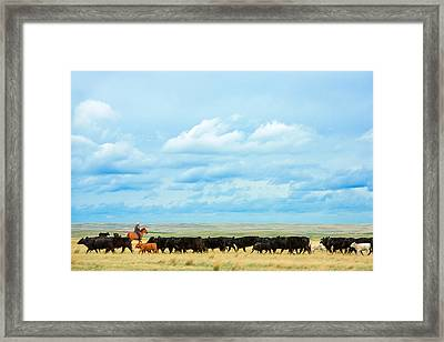 Bringing In The Herd Framed Print by Todd Klassy