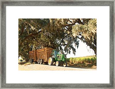 Bringing Sugarcane Ton The Mill Framed Print