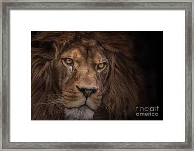 Brink Of Extinction Framed Print by Ashley Vincent
