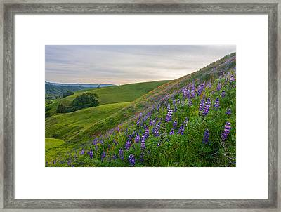 Briones Wildflowers Framed Print