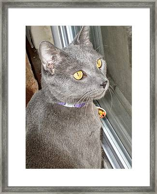 Brique Watching The Snow Fall Framed Print