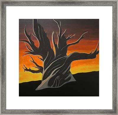 Bristle Cone Pine At Dusk Framed Print by Drew Shourd
