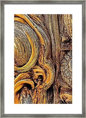 Framed Print featuring the photograph Bristlecone Pine Bark Detail White Mountains Ca by Dave Welling