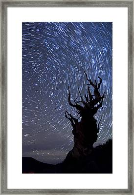 Bristlecone Star Trails Framed Print by Cat Connor