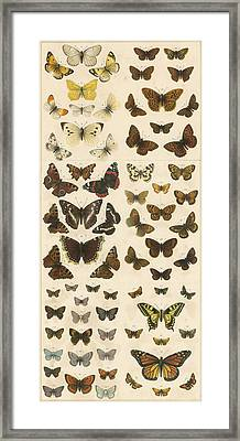 British Butterflies Framed Print by English School