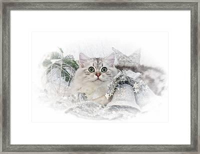 British Longhair Cat Christmas Time II Framed Print by Melanie Viola