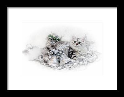 Felidae Framed Prints
