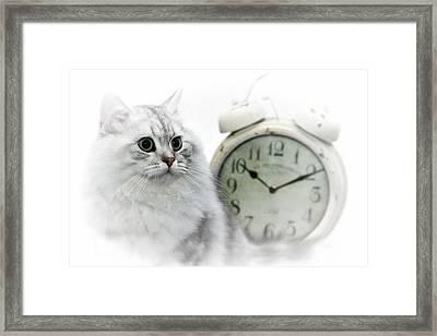 British Longhair Cat Time Goes By II Framed Print by Melanie Viola