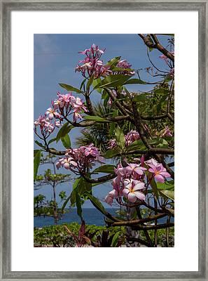 British West Indies, Cayman Islands Framed Print by Lisa S. Engelbrecht