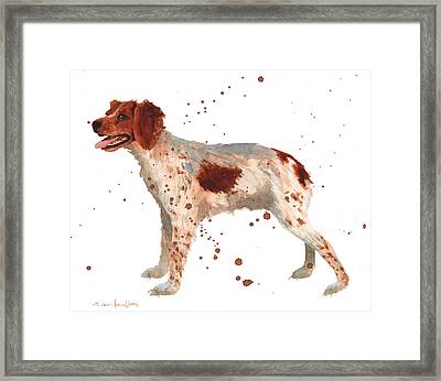 Brittany Spaniel Framed Print by Alison Fennell