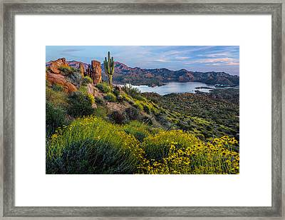 Brittlebush Over Bartlett Framed Print by Guy Schmickle