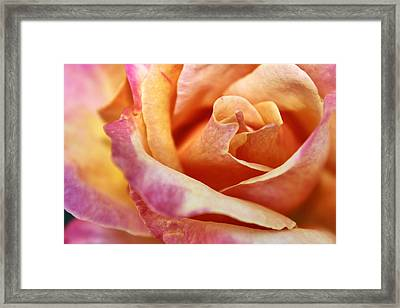 Framed Print featuring the photograph Broadway Hybrid Tea Rose by Jason Politte