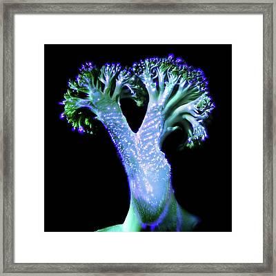 Broccoli Floret Framed Print