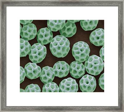 Brochosomes Framed Print by Steve Gschmeissner
