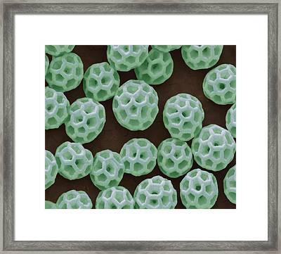 Brochosomes Framed Print